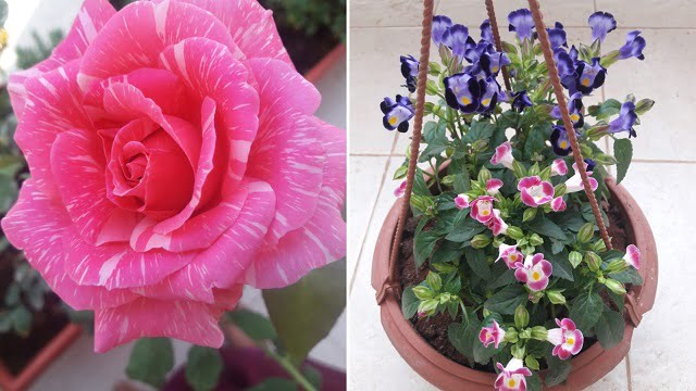 reena sheth garden plants