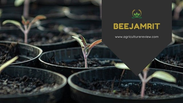 BEEJAMRIT: Learn How To Prepare And Use Beejamrit
