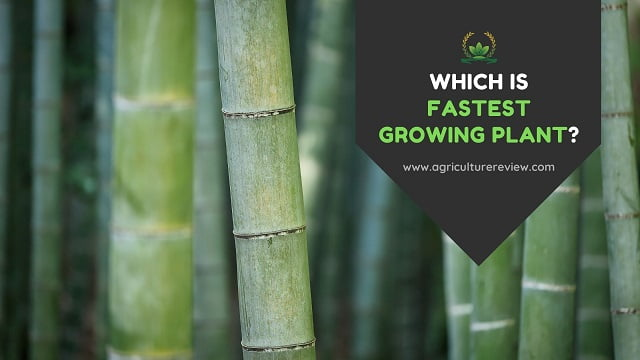 Fastest growing plant: The Answer Can Change The Way You Think!