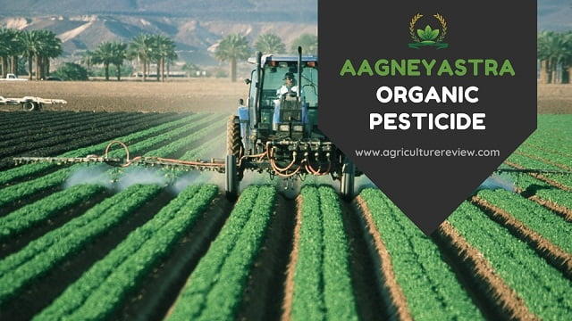 AAGNEYASTRA: How To Prepare And Use  Aagneyastra Organic Pesticide