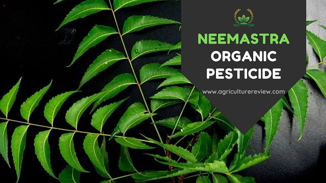 NEEMASTRA: How To Prepare And Use Neemastra Organic Pesticide