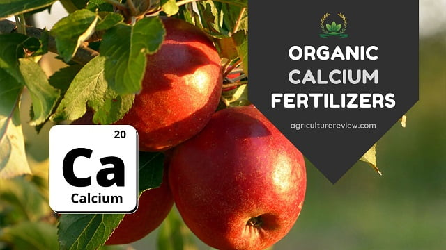 organic sources of calcium fertilizers for plants