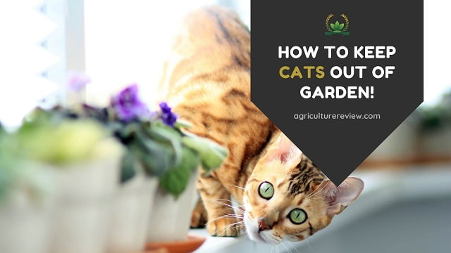 How To Keep Cats Out Of Garden: Protect Your Plants From Cats