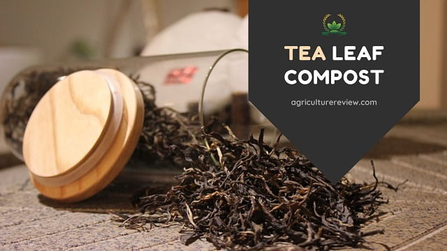 TEA LEAF COMPOST: How To Prepare And Use Tea Leaves As Compost