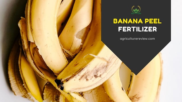 Banana Peel Fertilizer: How To Use Banana Peel As Fertilizer