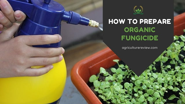How to make ORGANIC FUNGICIDE for plants!