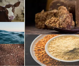 jeevamrut ingredients, cow dung, cow urine, pulses flour, jaggery, water, organic fertilizer