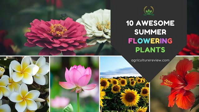 Summer Flowering Plants: 10 Awesome Summer Flowers For Your Garden