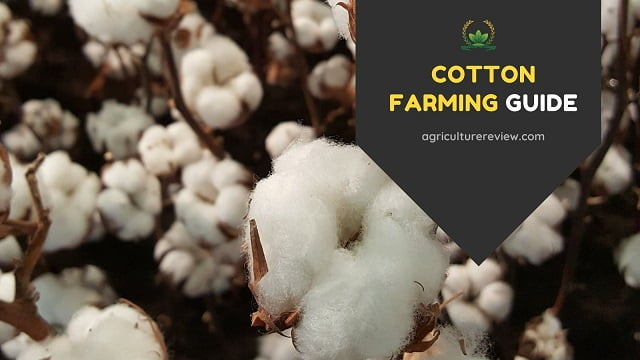 Cotton Farming Guide: Complete Guide On Farming Of Cotton