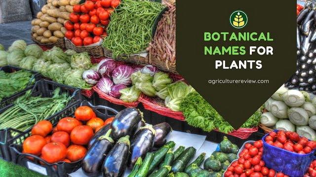botanical names for plants