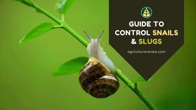 How To Control Snails & Slugs In Garden & Farm
