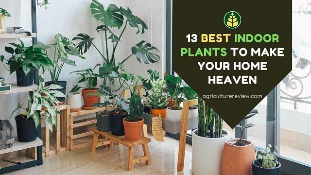 13 Best Indoor Plants To Make Your Home Heaven