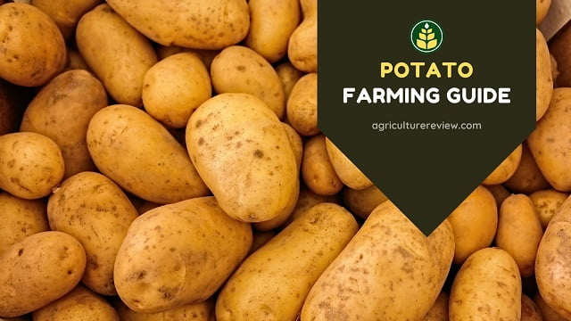 Potato Farming Guide: Complete Guide On Farming Of Potato