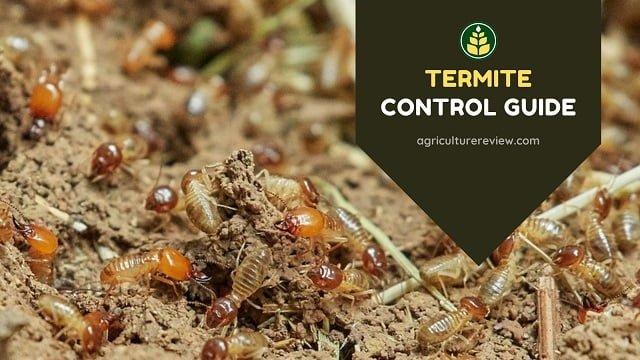 Termite Control Guide: How To Control Termites In Farm & Garden