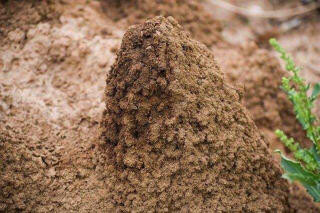 termite mound, termite pest, termite control, how to control termites, pest control