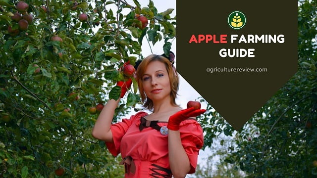Apple Farming Guide: Complete Guide On Farming Of Apple