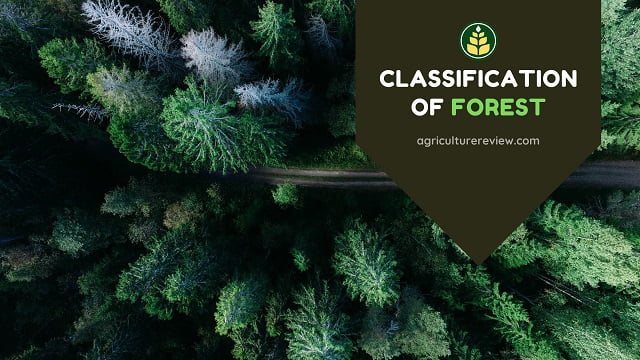 Classification Of Forest