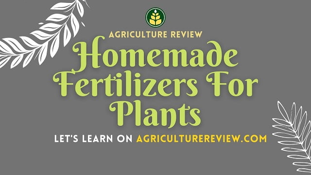 Homemade Fertilizers For Plants: How To Make & Use