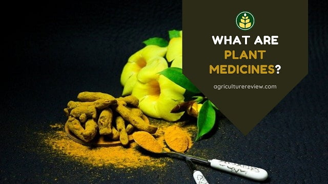 Plant Medicine: What Are Plant Medicines, History And Uses