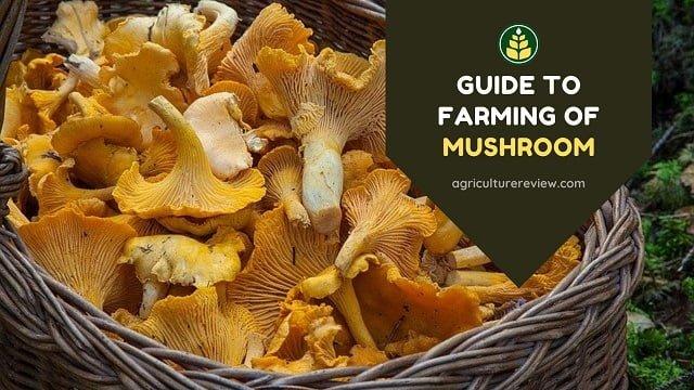 Farming Of Mushroom: Basic Guide On Cultivation Of Mushroom