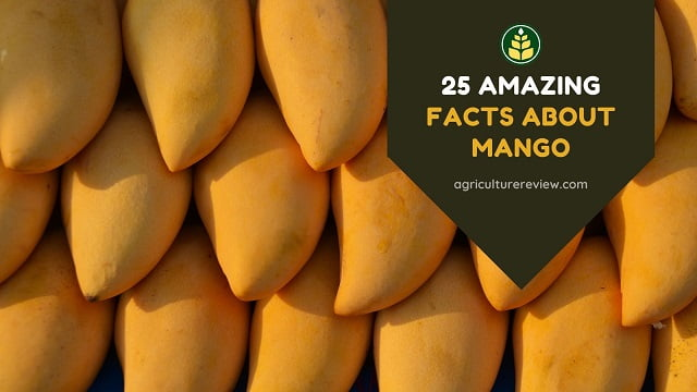 mango-facts