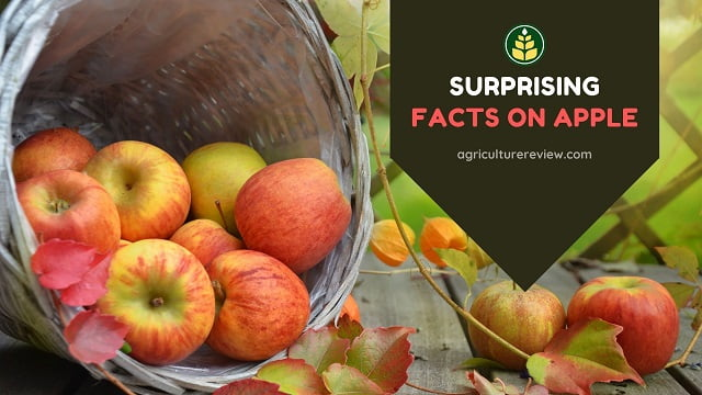Facts On Apple: Surprising Facts About Apples