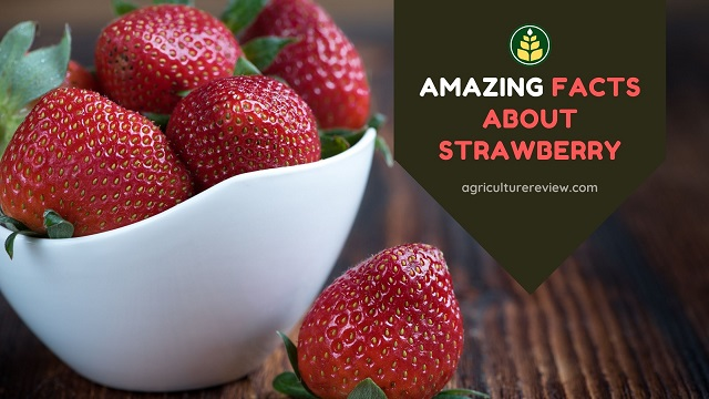 Strawberry Facts: 20 Amazing Facts About Strawberry