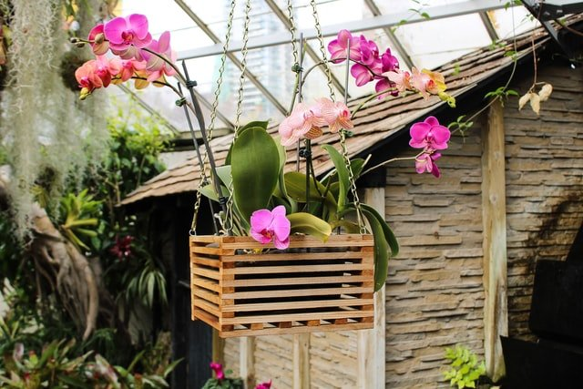 epiphytic orchid, orchid, orchid farm, orchid flower, orchid cultivation, how to start orchid farm,
