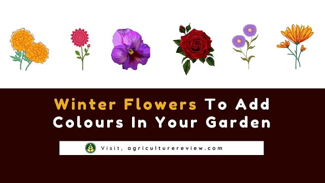 Winter Flowers To Add Colours In Your Garden